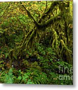 Moss In The Rainforest Metal Print