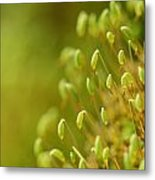 Moss With Capsules Metal Print