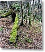 Mossey Log Metal Print
