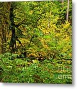 Mossy Rainforest Metal Print