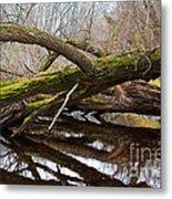 Mossy Tree Metal Print by Ms Judi