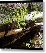 Mossy Waterfall On Mushroom Rock Metal Print
