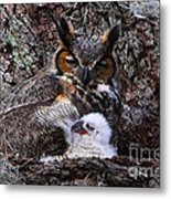 Mother And Baby Owl Metal Print