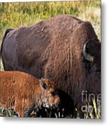 Mother And Calf Metal Print