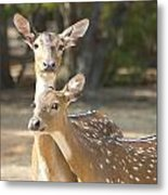 Mother And Child V3 Metal Print