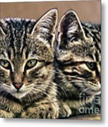 Mother And Child Wild Cats Metal Print