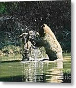 Mother And Cub  Metal Print