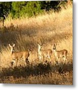 Mother And Twins Metal Print