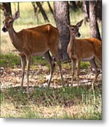 Mother And Yearling Deer Metal Print