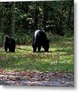 Mother Bear And Cub Metal Print