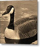 Mother Goose Metal Print by Sergio Aguayo