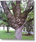Mother Weller's Tree Metal Print