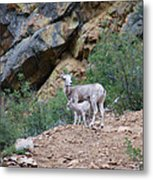 Mothers Shelter Metal Print
