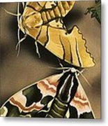Moths Metal Print
