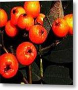 Mountain Ash Berries Metal Print