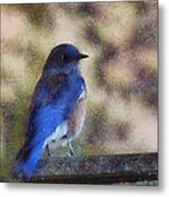 Mountain Bluebird Painterly Metal Print