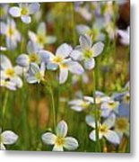 Mountain Flowers 5534 Metal Print