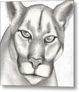 Mountain Lion Metal Print by Rick Hill