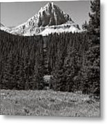 Mountain Peak Above The Tree Line Metal Print