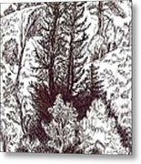 Mountain Pines And Aspen Field Sketch Metal Print