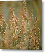 Mountain Sorrel Metal Print