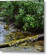 Mountain Stream And Rhododendron Metal Print