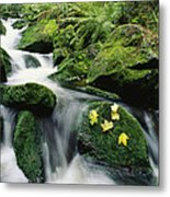 Mountain Stream Cascading Metal Print