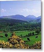 Mourne Mountains, Co Down, Ireland Metal Print