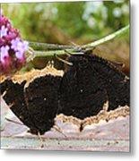 Mourning Cloak Butterfly Lovin' Metal Print