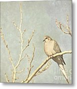 Mourning Dove In Winter Metal Print