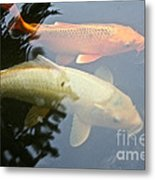 Mr And Mrs Koi Metal Print