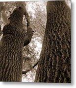 Mr And Mrs Oak Land Metal Print