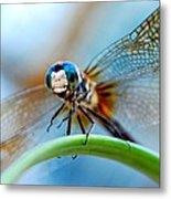 Mr Fly Metal Print by Kendra Longfellow