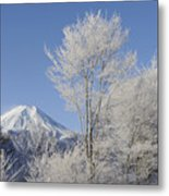 Mt Fuji And Frost-covered Trees Metal Print