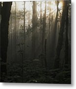 Mt. Hood National Forest Near Larch Metal Print