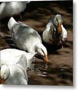 Muddy Ducks Metal Print