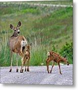 Mule Deer Doe And Twin Fawns Metal Print