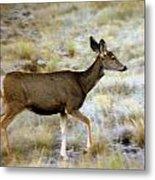Mule Deer On The Move Metal Print