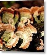Multi Colored Gill Polypore Fungi 1555 Metal Print