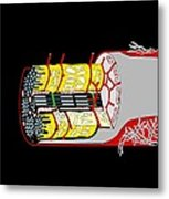 Muscle Cell Anatomy, Artwork Metal Print