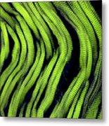 Muscle Fibres, Sem Metal Print