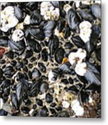Muscles And Barnacles Metal Print