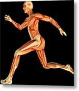 Muscular System Metal Print