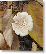 Mushroom And Autumn Leaves Metal Print
