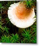 Mushroom Fan Metal Print