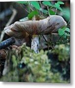 Mushroom Up Close 7046 1676 Metal Print