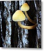 Mushrooms 3 Metal Print