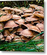 Mushrooms Galore Metal Print