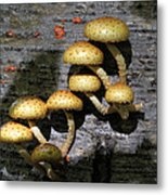 Mushrooms In Relief  Metal Print