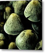 Mushrooms Metal Print